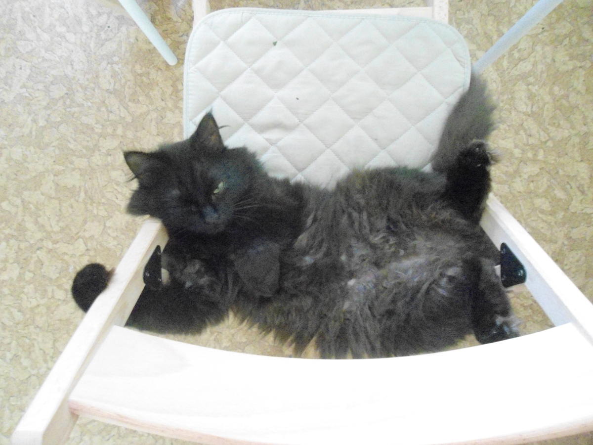 Чёрный кот на стуле вверх пузом