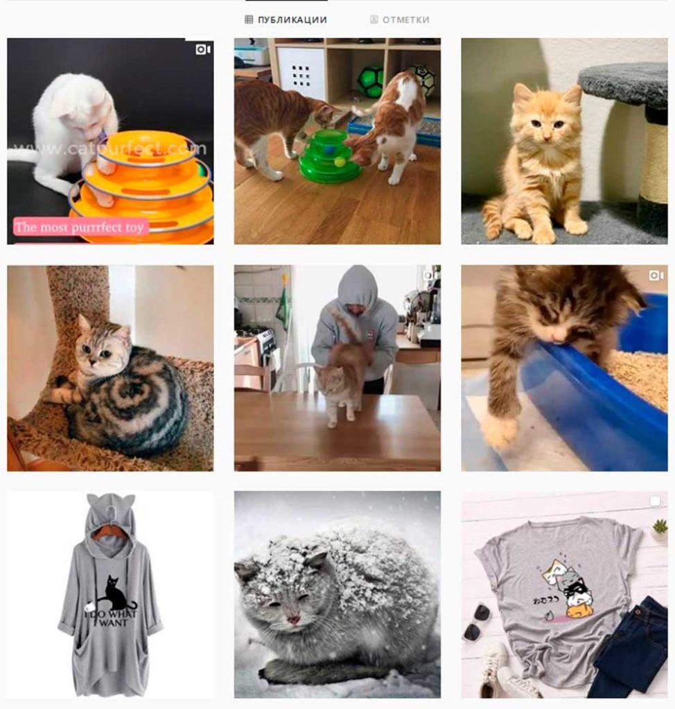 Инстаграм про котиков