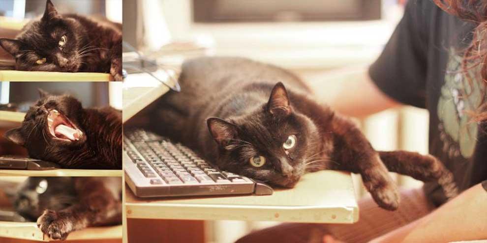 Кот вебмастера