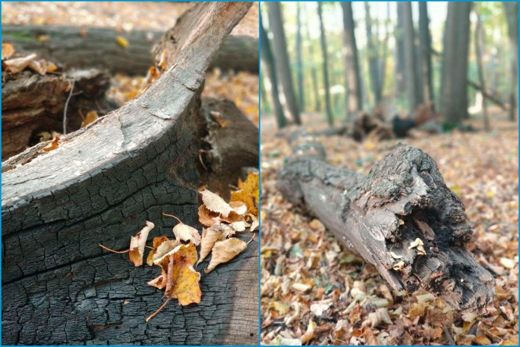 Осенние упавшие деревья (фотография)